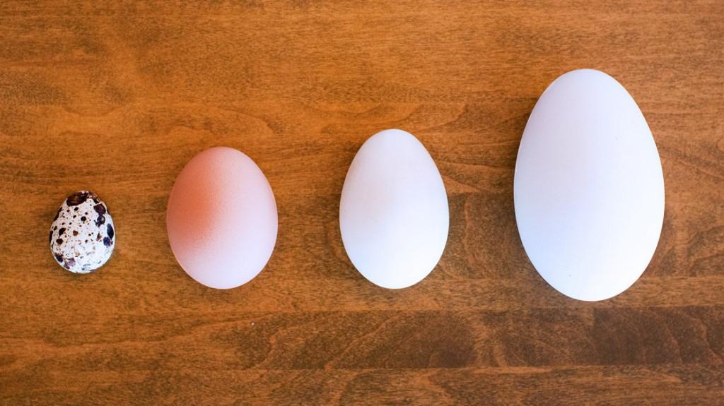 egg_05_new_wide-8ad01abf5bb925a1f0f301453d7b89513ec29407-s40-c85