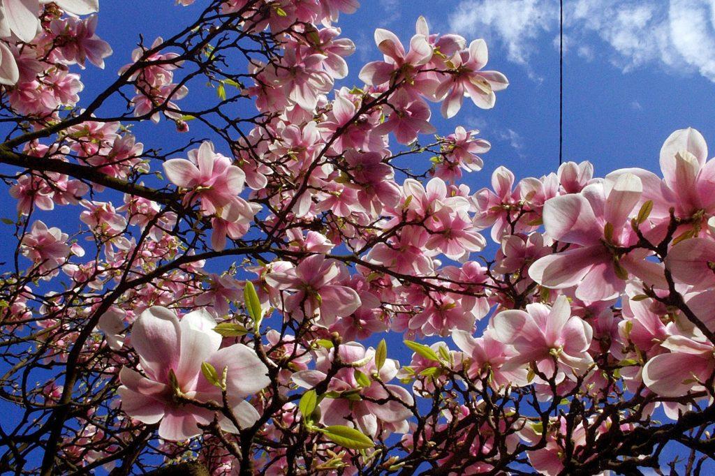 rzeczy zebrane_tu i teraz_szczecińskie magnolie_8